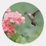 hummingbird 2.jpg round sticker