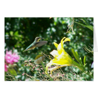 Hummingbird 5 card