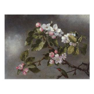 Hummingbird and Apple Blossoms Martin J. Heade Postcard
