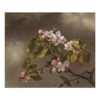 Hummingbird and Apple Blossoms Poster