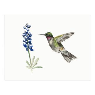 Hummingbird and Bluebonnet Postcard
