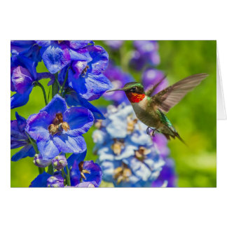 Hummingbird And Delphinium Card