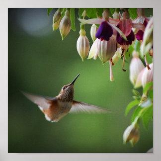 Hummingbird And Fushia Flower Plant Print