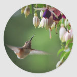 Hummingbird And Fushia Flower Plant Sticker