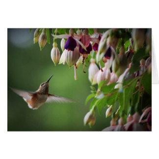 Hummingbird and Fushia Plant Card