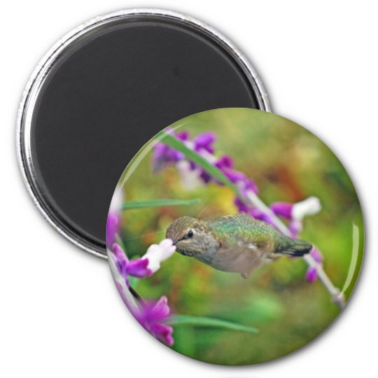 Hummingbird and Mexican Sage II Magnet
