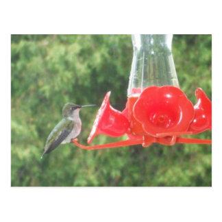 Hummingbird at Feeder Postcard