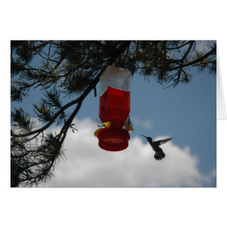 HUMMINGBIRD AT THE FEEDER CARD