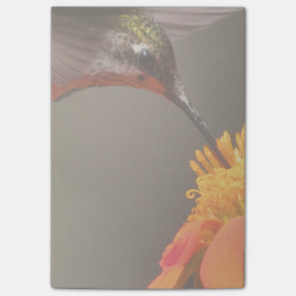 Hummingbird Bird Sunflower Flower Floral Garden Post-it Notes
