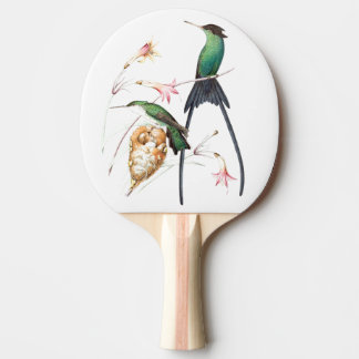 Hummingbird Bird Wildlife Animal Flowers Paddle