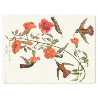 Hummingbird Birds Audubon Flowers Tissue Paper