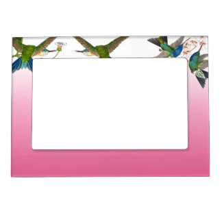 Hummingbird Birds Flowers Animals Magnetic Frame