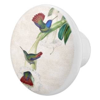 Hummingbird Birds Wildlife Animal Floral Knob