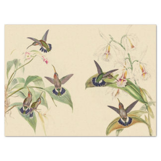Hummingbird Birds Wildlife Flowers Tissue Paper