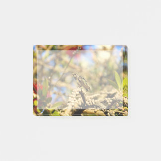 Hummingbird, California, Photo with border Post-it Notes