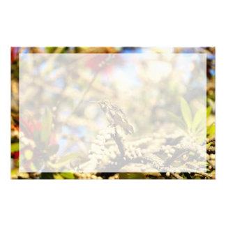 Hummingbird, California, Photo with border Stationery