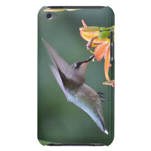 Hummingbird iPod Touch Cover