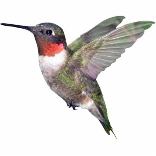 Hummingbird Christmas Ornament Photo Sculpture Decoration
