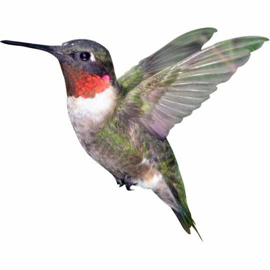 Hummingbird Christmas Ornament Photo Sculpture Decoration