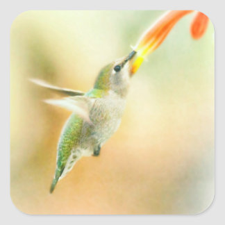 Hummingbird early morning flight square sticker