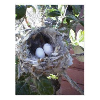 Hummingbird Eggs Postcard