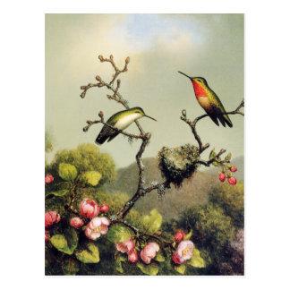 Hummingbird Family and Apple Blossom Postcard