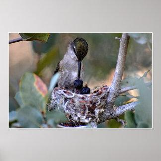 Hummingbird Feed Time Poster