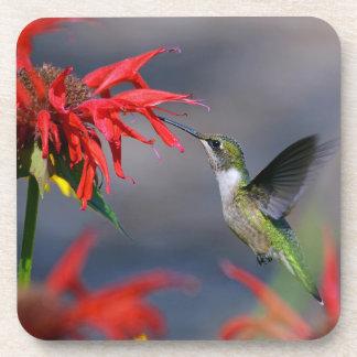 Hummingbird Feeding Coaster Set