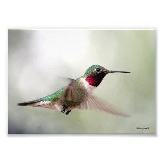 Hummingbird Flight Photo Art