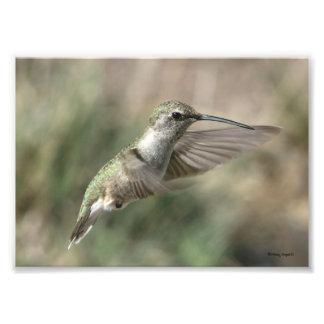Hummingbird Green Art Photo