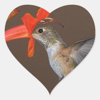 HUMMINGBIRD HEART STICKER