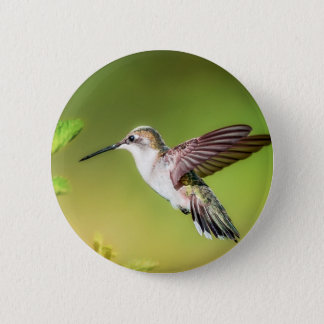 Hummingbird in flight 6 cm round badge