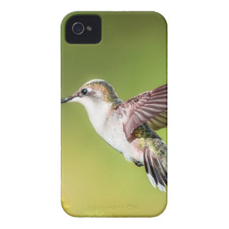Hummingbird in flight iPhone 4 cases