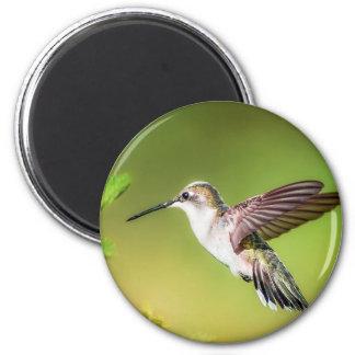 Hummingbird in flight magnet
