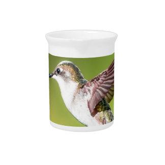 Hummingbird in flight pitcher