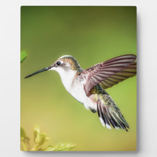 Hummingbird in flight plaque