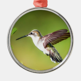 Hummingbird in flight Silver-Colored round decoration