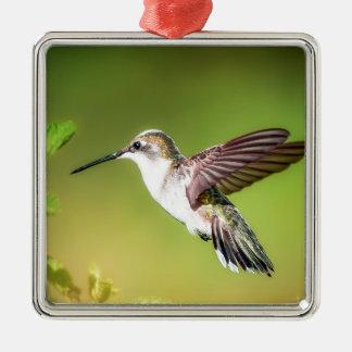 Hummingbird in flight Silver-Colored square decoration