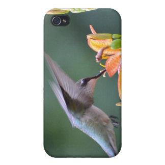 Hummingbird iPhone 4/4S Cases