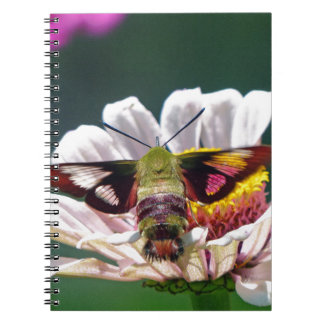 Hummingbird Moth Notebook