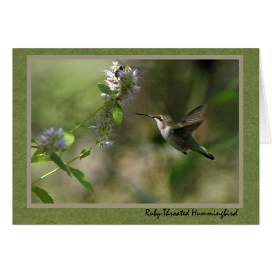 Hummingbird note card