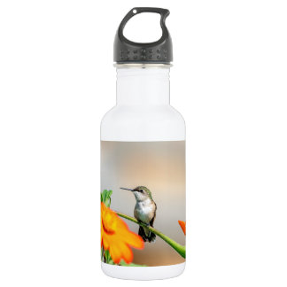 Hummingbird on a flowering plant 532 ml water bottle