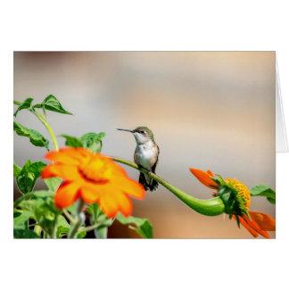 Hummingbird on a flowering plant card