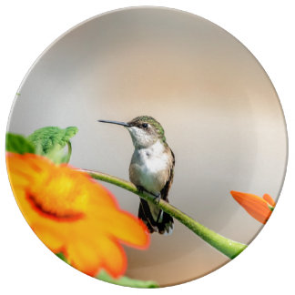 Hummingbird on a flowering plant plate
