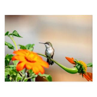 Hummingbird on a flowering plant postcard