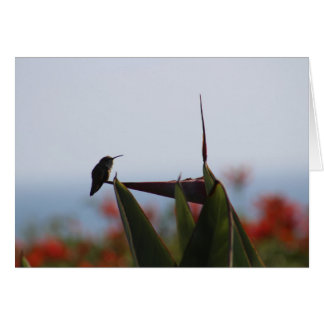 Hummingbird on Bird-of-Paradise Flower Blank Card