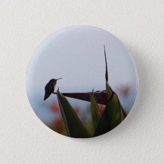 Hummingbird on Bird-of-Paradise Flower Button