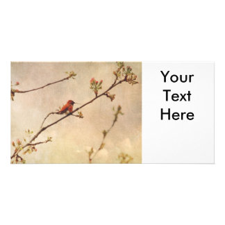 Hummingbird on Flowering Cherry Tree Picture Card