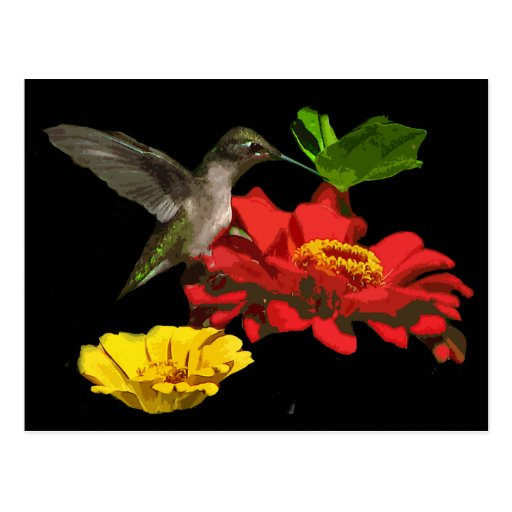 Hummingbird on Zinnias Post Card