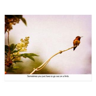 Hummingbird Out on a Limb Postcard